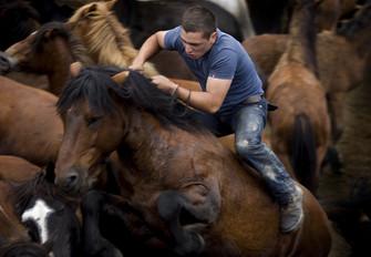 Curro de Sabucedo (wild horse festival), A Estrada